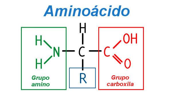 Observe a estrutura geral de um aminoácido.
