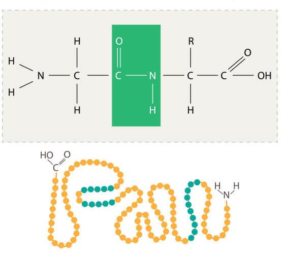 Observe como é uma proteína em estrutura primária.