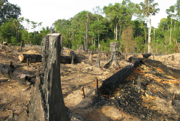 A devastação na região da Amazônia tem preocupado muitos ambientalistas, podendo trazer consequências irreversíveis.