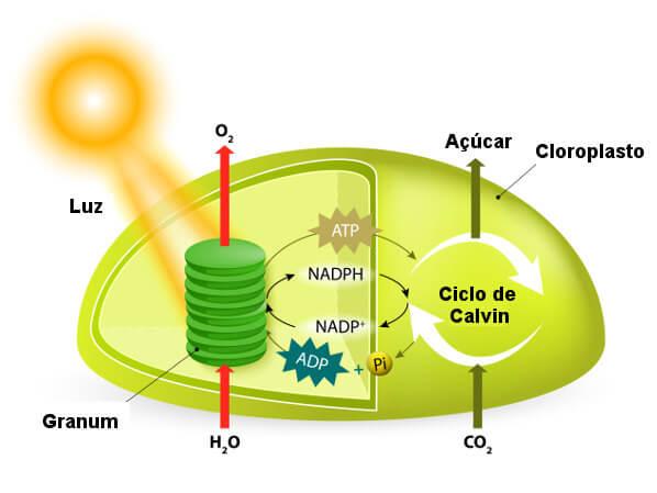 Observe o esquema com os principais pontos do processo de fotossíntese.
