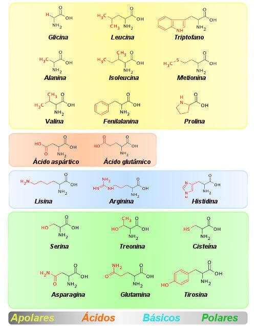 Observe que os 20 aminoácidos estão agrupados conforme a propriedade de suas cadeias laterais.