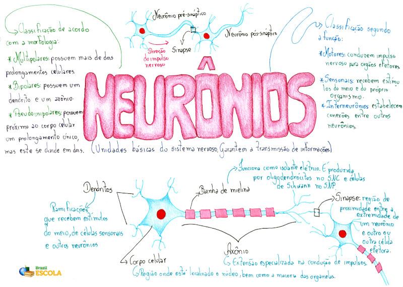 Neurônios Características E Os Tipos De Neurônios Brasil