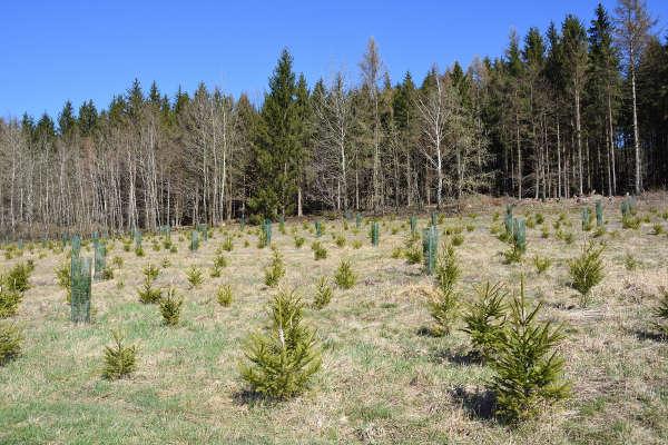 O desmatamento no mundo tem diminuído com os esforços de alguns países para reflorestar suas áreas.