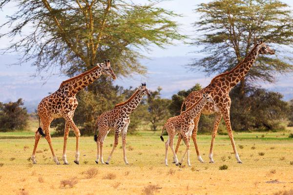 Nessa fotografia podemos observar um exemplo de população.